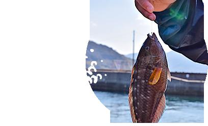 釣果イメージ